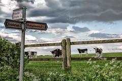 Crossroads (jamesromanl17) Tags: landscape outdoors sky field grass agriculture farm cloud travel nature road cow cows farming farmland sign signpost clouds cloudscape cloudy skies canon eos 5d iii fields