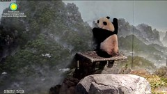 2017_07-04s (gkoo19681) Tags: beibei chubbycubby fuzzywuzzy reaching standingtall hopeful sotall poorbaby sosad ccncby nationalzoo