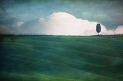 Solitario (Aránzazu Vel) Tags: toscana tuscany countryside nubes clouds sky nubi tree campo campagna textura texture