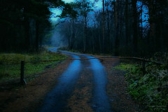 This road leads to a place called the Devil's Stool. (AlexMadWorld) Tags: road the gloomy leads place terrible forest fog twilight bewitching