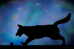 the pounce (sure2talk) Tags: macromondays silhouette backlit thepounce bokeh ball gsd plasticmodel model playmobil nikond7000 nikkor85mmf35gafsedvrmicro flash speedlight sb900 offcamera softbox diffused macro closeup hmm dog