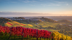 Vineyards around Grabkapelle on Rotenberg, Stuttgart (jochenbuehler) Tags: kappelberg orte rotenberg stuggart grabkapelle württemberg vineyard autumn sunset colour vista memorial