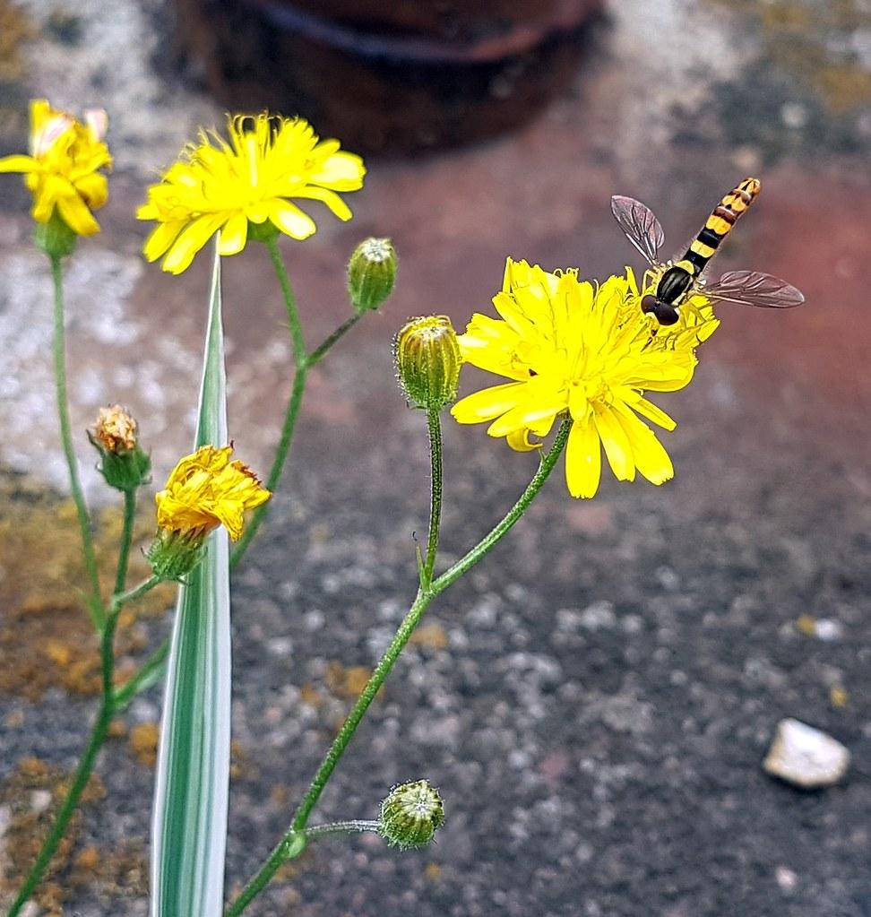The world 39 s best photos of fliegen and natur flickr hive for Blumen fliegen