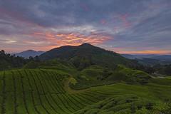 Morning Scene at Tea Plantation (Jacobs LB Chong) Tags: cameron highland canon 5dmark3 eos5dmark3 fiery morning sunrise landmarks malaysia tea plantation colorful landscape