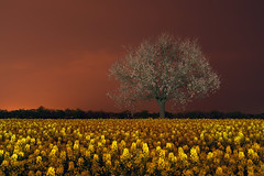TREE IN A YELLOW FLOWER FIELD (JanLeonardo - Light Painting Artist) Tags: alphaddicted paintingwithlight lightpaintingworkshop deutschewelle moto nightphotography lightstar lightmaster flickrphotographer lightpaintingmaster wwwlightpaintingeu lightpainting lightart performancephotography lapp plp lightwriting lightdrawing llightartphotography nightartphotography carlzeiss manfrotto manfrottotripods manfrottogetriebeneiger ledlenser waltherpro waltherproxl3000r waltherproxl7000r waltherpropl60r sonya7rii manfrottolumimuse6 lichtkunstfotografie lightartphotography performance novoflex canon nikon leica pro photography art light lichtzeichnen ngcdistagont2815 distagont3518 distagont418 distagont2821 distagont224distagont1435 lenovo lenovoin lenovovibe lenovoifa lenovox1carbon lenovoyoga3pro internationallightpaintingaward2015 award lightpaintingaward sony sonya7r ilpa
