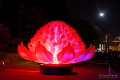 20170531-35-VIvid Light display at Sydney Botanic Gardens (Roger T Wong) Tags: 2017 australia nsw newsouthwales rogertwong sel2470z sony2470 sonya7ii sonyalpha7ii sonyfe2470mmf4zaosscarlzeissvariotessart sonyilce7m2 sydney sydneybotanicalgardens vivid festival flower illuminated lights night red warratah