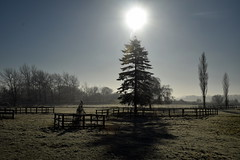 Oh Christmas Tree (Worthing Wanderer) Tags: sussex westsussex arunvalley arundel arundelpark winter frosty sunny december southstoke