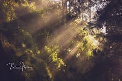 Morning Glory (ninaflynnphotography) Tags: semeru sunrise sunbreak green lighting forestry indonesian ninaflynn2017 ninaflynnphotography travel adventure jungletreck backpacking