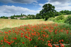 Summertime (Holfo) Tags: flower countryside field kingswinford poppyfield summer landscape nikon poppies flowers meadow d750 england tranquil tranqulilty staffordshire uk layers midlands gb greatbritain rural bushes trees