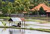 La petite de la rizière (Ye-Zu) Tags: portrait tdm child bali rizière tourdumonde indonesia worldtour enfant munduk indonésie