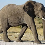 DSC07183 - NAMIBIA 2017 thumbnail