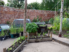 Erleigh Road Community Garden (2) (karenblakeman) Tags: erleighroadcommunitygarden erleighroad reading uk 2017 june vegetables food4families berkshire rfgn readingfoodgrowingnetwork