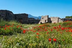 Pompei (Gianluca Isidoro) Tags: scavi di pompei pompeii ruins napoli landscape papaveri sky nikon d750