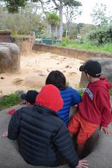 DSC_0083 (rlnv) Tags: california bayarea sanfrancisco sanfranciscozoo zoo nikond3300 1855mmf3556gvrii tomás walter caitlin jacob