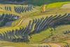 File602.0617.Trồng Tồng.Cao Phạ.Mù Cang Chải.Yên Bái. (hoanglongphoto) Tags: asia asian vietnam northvietnam northwestvietnam landscape scenery vietnamlandscape vietnamscenery vietnamscene terraces terracedfields terracedfieldsatvietnam transplantingseason sowingseeds afternoon sunny sunnyafternoon sunnyweather valley flanksmountain hdr canon canoneos1dsmarkiii canonef70200mmf28lisiiusmlens tâybắc yênbái mùcangchải caophạ phongcảnh ruộngbậcthang ruộngbậcthangmùcangchải thunglũng mùacấy đổnước mùacấymùcangchải đổnướcmùcangchải sườnnúi buổichiều nắng nắngchiều bóngđổ hillside sườnđồi tophill đỉnhđồi sunlight abstract trừutượng curve đườngcong thunglũngcaophạ trồngtồng