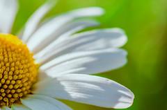 (ErrorByPixel) Tags: flower flora nature 100mm macro closeup green yellow white handheld pentax k5 errorbypixel pentaxart blur