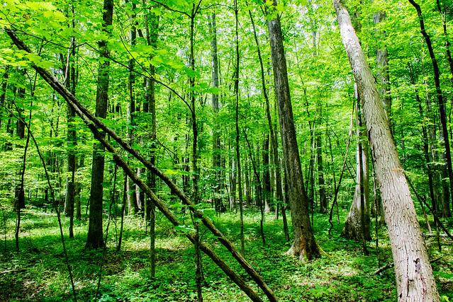 Douglas Woods Nature Preserve - June 21, 2017