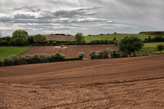 Cheshire Farmland (jamesromanl17) Tags: agriculture field farm landscape sky nature crop outdoors wood grass scenic rural farming farmland clouds cloud cloudscape cloudy skies fields sun sunlight cheshire england britain countryside canon eos 5d iii