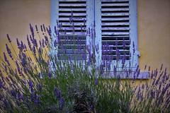 E poi ci sono finestre che profumano di lavanda (ornella sartore) Tags: finestra fiori natura colori allaperto