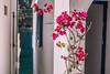 Flower with a view (A & A McKee) Tags: crete sfakia loutro greece island village flower windows door blossom bokeh nikon d500 sigma 1835mm 18 bloom sea libyan