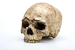 Liujiang Skull Homo sapiens, from Australian Museum (Historystack) Tags: evolution humanevolution earth anatomicallymodernhuman paleolithic stoneage solarsystem asia milkyway hominini humanmitochondrialdnahaplogroups haplogroupmmtdna haplogroupnmtdnahumanevolutionskeletonskulljawbonetracksthroughtimemodelfacialreconstructionearlymanjawbonebones