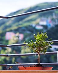 Growing up bonsai