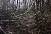 fullsizeoutput_6f (springday) Tags: freezeout freezeout2017 canon photography sprinday dayspring dayspringcreations camping trip good times hiking winterhiking goodtimes pa pennsylvania hellyeah fuckyeah cold icy