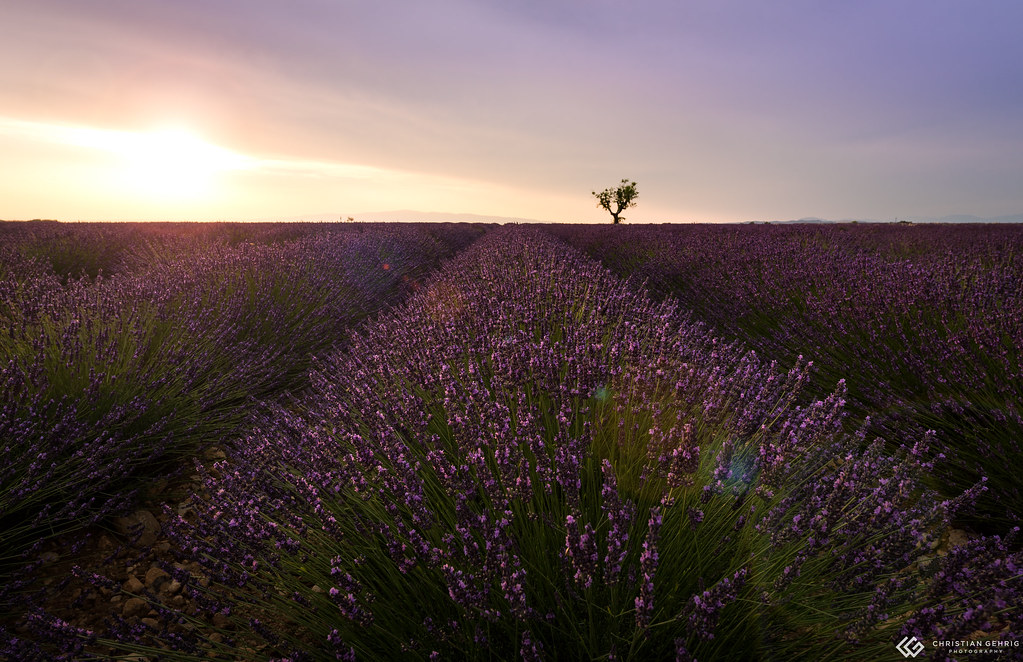 the world 39 s best photos of frankreich and lavender. Black Bedroom Furniture Sets. Home Design Ideas