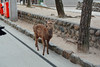 Deer (Jennifer Lea) Tags: miyajima japan deer sigma art lense 30mm nikon adventure