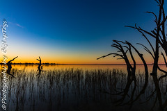 IMG_5439 (biglaptogs) Tags: barmera lakebonney riverland sa states sunsetsunrise
