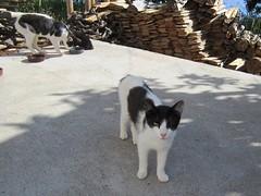 IMG_8687 (Chat Malicieux) Tags: joana