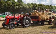 IMG_0069_Woodcote Rally 2017_0114 (GRAHAM CHRIMES) Tags: woodcote rally 2017 steam woodcoterally2017 woodcotesteamrally2017 woodcoterally transport traction tractionengine tractionenginerally steamrally steamfair showground steamengine show steamenginerally vintage vehicle vehicles vintagevehiclerally vintageshow heritage historic classic country commercial preservation wwwheritagephotoscouk restoration woodcotesteam masseyferguson mf 65 tractor 1964 rca264b
