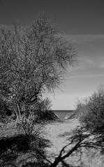 Pfad zum Strand / Path to the beach (Lichtabfall) Tags: landschaft schwarzweiss monochrome blackandwhite blackwhite landscape einfarbig bäume trees sand path pfad beach strand ostsee inselpoel poel mecklenburgvorpommern balticsea timmendorf timmendorfstrand