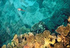 sea life (photoksenia) Tags: sea fish color animal water