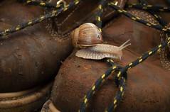 The big man is fast (Mathijs van der Elburg) Tags: snail slak easy shoe