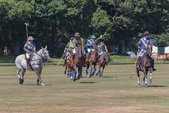 chasing the ball (DaveMac photography) Tags: polo newforest england newforestpoloclub sunday sunnyafternoon ponies equestrian equine mallets events pologame outdoors