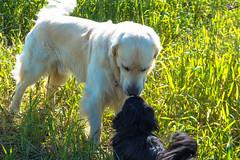 Зверушки 0413 (2016.06.01) (vladsky78) Tags: ильичёвск животные зелень поле собака