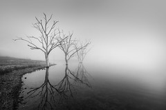 Lake Windamere Trio (Colin_Bates) Tags: lake windamere fog foggy morning winter tress reflections
