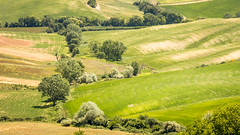 Rolling countryside (hjuengst) Tags: toscany green hill asciano siena italy