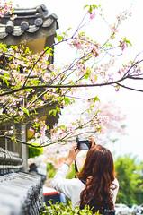 DSC_4479 (Frankie Tseng (法蘭基)) Tags: yms taipei taiwan flower flowers nikon cherryblossoms summer spring 2017 abstract blur bw bwphotography blackwhite yangmingshan 台北 櫻花 陽明山 台灣 抽象