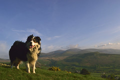 Heaven and Earth. (Mike & Indy) Tags: laddie dog dogs bordercollie llanfairfechan northwales carneddau mountains explore