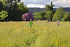 Early days of summer / Prvi ljetni dani (Gordana AM) Tags: wwwgordanaphotocom gordanamladenovic gordana photography photographer photo portcoquitlam bc britishcolumbia vancouver lowermainland canada lepiafgeo summer june sunny day late afternoon grass meadow cfcg open space two boys running fun boyhood childhood children teens outside outdoors nature green pnw chasing run race brothers competition freedom tall