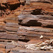 Rock patterns near Dales Gorge
