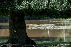 """adam zyworonek fotografia lubuskie zagan zielona gora • <a style=""""font-size:0.8em;"""" href=""""http://www.flickr.com/photos/146179823@N02/34481907614/"""" target=""""_blank"""">View on Flickr</a>"""