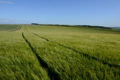 ocean of calmness (rainbowcave) Tags: field tracks spring nature felder spuren wind rheinhessen