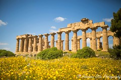 Selinunt (johannesotte84) Tags: greek griechisch tempel temple sicily sizilien sicilia italy italia italien selinunt selinunte spring flower yellow landmark high light stunning wonderfull