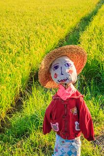 不是稻草做的稻草人