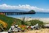 Pillar Point Pier (davidkayak47) Tags: california nastursiums pier sea yacht pillar point mavericks harbour
