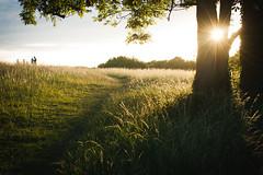 Southdowns UK (xkaylabellex) Tags: canon40mmlens photography southdowns uk sunset southcoast grass green greengrass england hills landscape