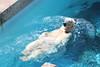 水族館10 (ののリサを信じろ) Tags: 水族館 白熊 カエル 蛙 シロクマ なまはげ 獅子舞 神社 桜 鯉のぼり アシカ